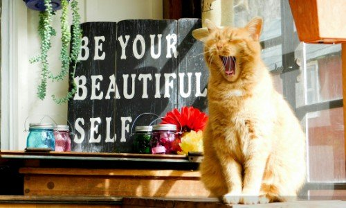 Red-cat-yawning-be-your-beautiful-self-sign-in-background